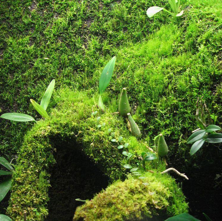 Atemberaubend Moossporen Mix 5 g - terra erfordia &CN_86